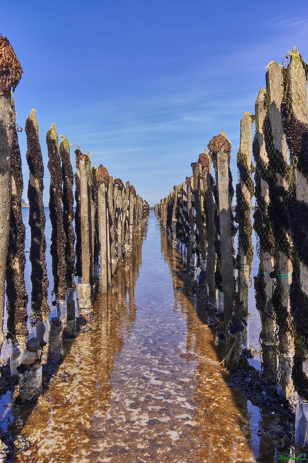 Rangées de bouchots dans la baie de la Fresnaye à Plévenon Cap Fréhel