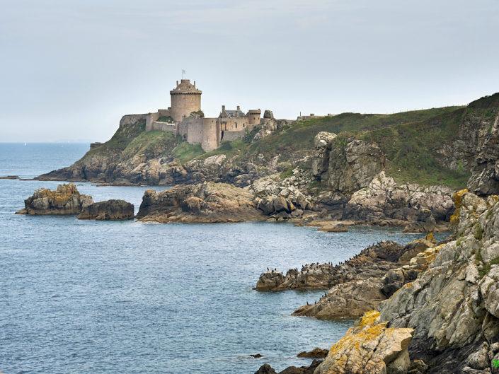 nature bretonne - Cormorans au Fort la Latte - la Roche Goyon
