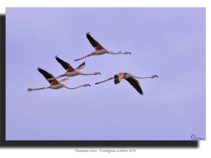 Tableaux de photographies de Nalofoto Nature