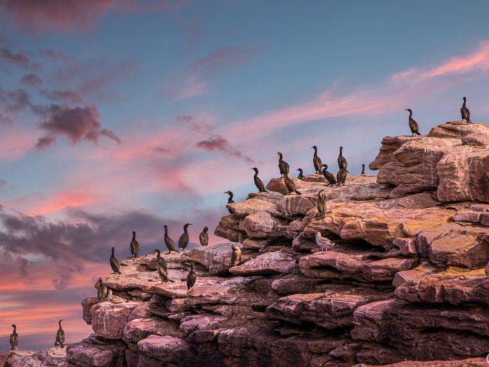 Les oiseaux du Cap