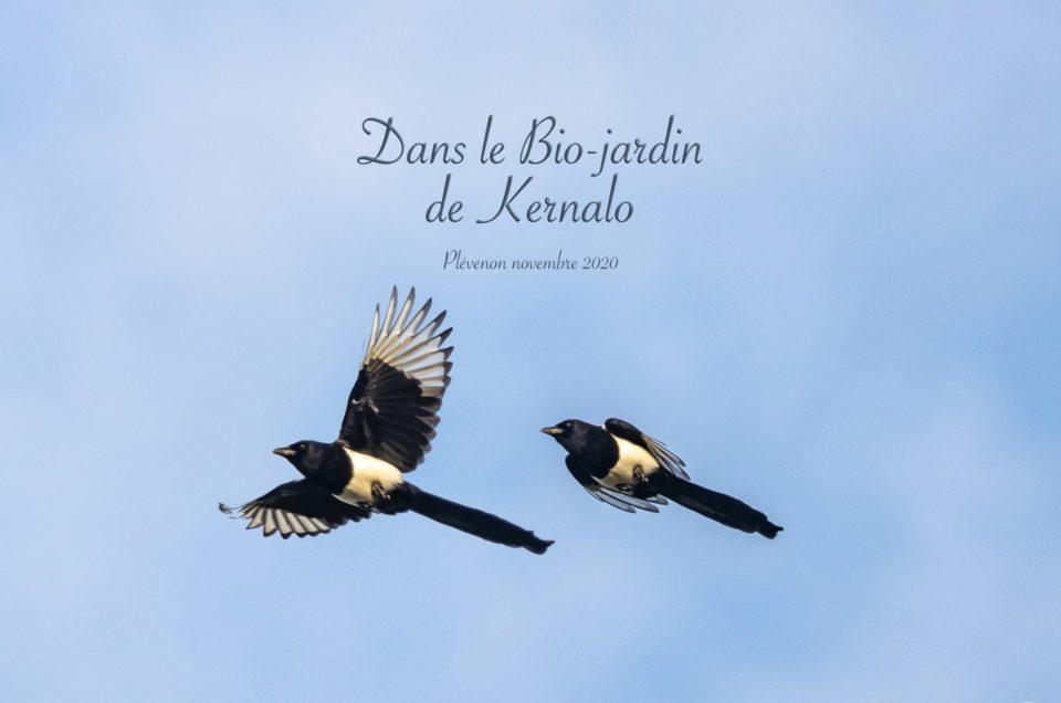 Derrière la fenêtre de ma cuisine : les oiseaux du jardin