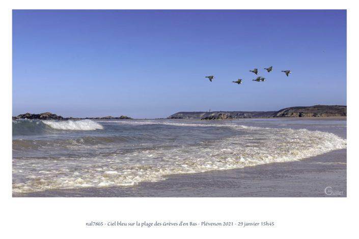 Vols d'oies Bernaches cravants sur la plage